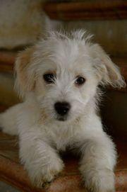Daisy, 4 172