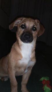 Kika, 4 Monate