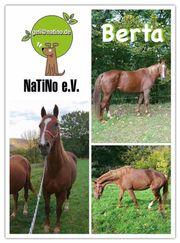 Berta - DRINGEND neue