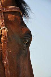 Suche Reitbeteiligung Pferd sucht Reiter