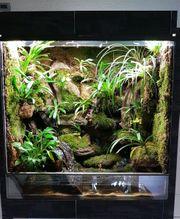 Dendrobaten Terrarium mit Pfeilgiftfröschen XL