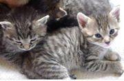 Katzen Babys, geboren