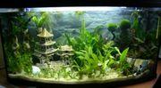 Suche Aquarium oder Fische
