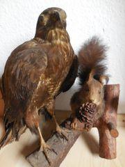 Eichhörnchen und Greifvogel