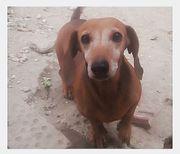 Tierschutzhundin