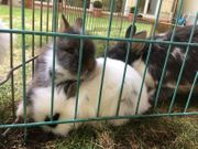 6 kleine Kanninchen-Babys