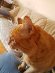 Katzen suchen dringend