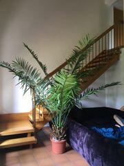 Palme In Jesenwang Pflanzen Garten Günstige Angebote Quokade