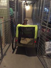 Neuer Fahrradanhänger für Hunde