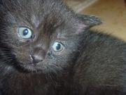 Kleines Kitten zu