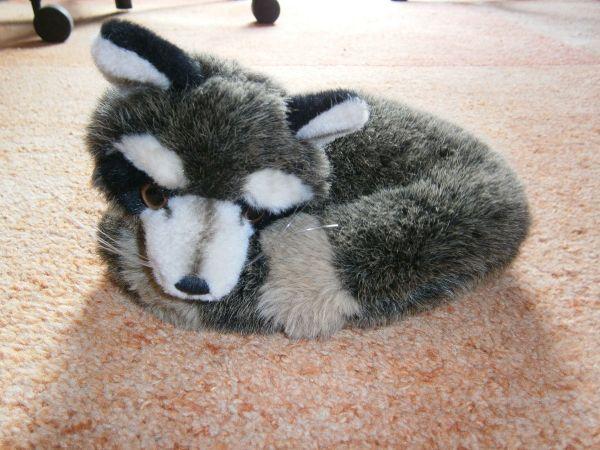 waschbär baby kaufen