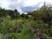 Liebevoll gepfleger Kleingarten