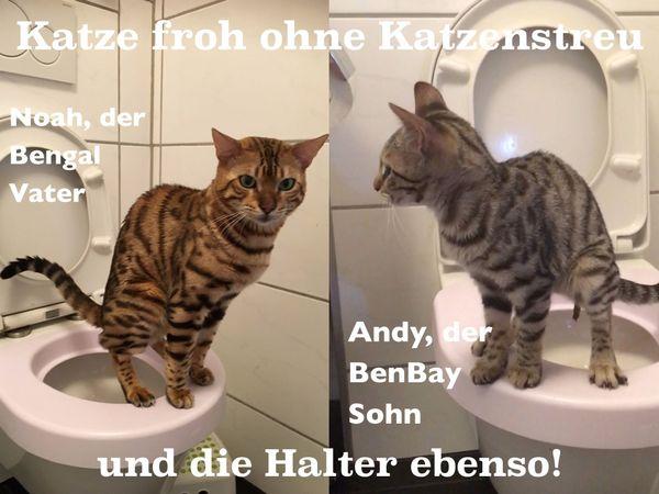bengal bombay benbay katze kater kitten trainiert wc. Black Bedroom Furniture Sets. Home Design Ideas