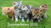 Urlaub mit Katzen -