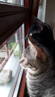 SABAT PAN - hundefeste Katzen suchen