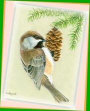 Suche Futterspender für die Wildvogelhilfe