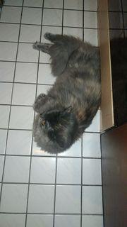 Katze 1 Jahr alt