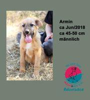 Armin - Kannst du NEIN zu