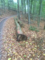 Eiche Stammholz (Schnittholzstämme)