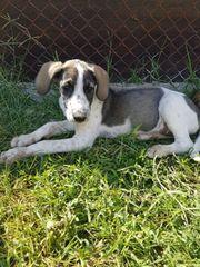 Rino, 5 Monate