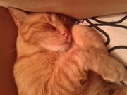 Katzenpärchen: Dina & Murphy