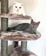 Katze und Kater.
